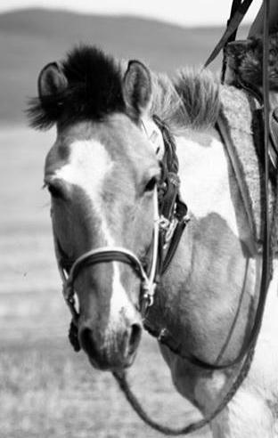 Nomad Randonnée Equestre