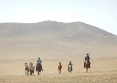 nomadrando-cheval09