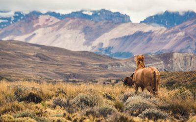 Voyage hivernal 2020 : Chili