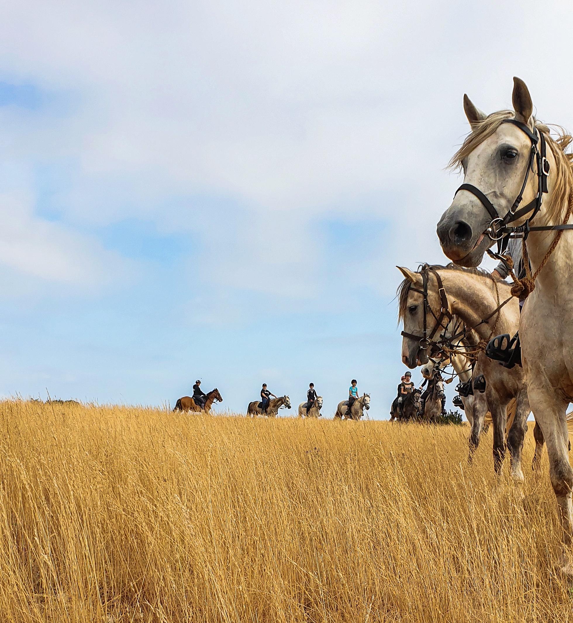 nomadrandoacheval colonne chevaux randonner sejour nature larzac nomad