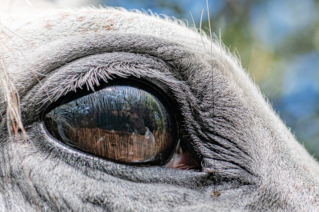 nomadrandoacheval larzac regard cheval