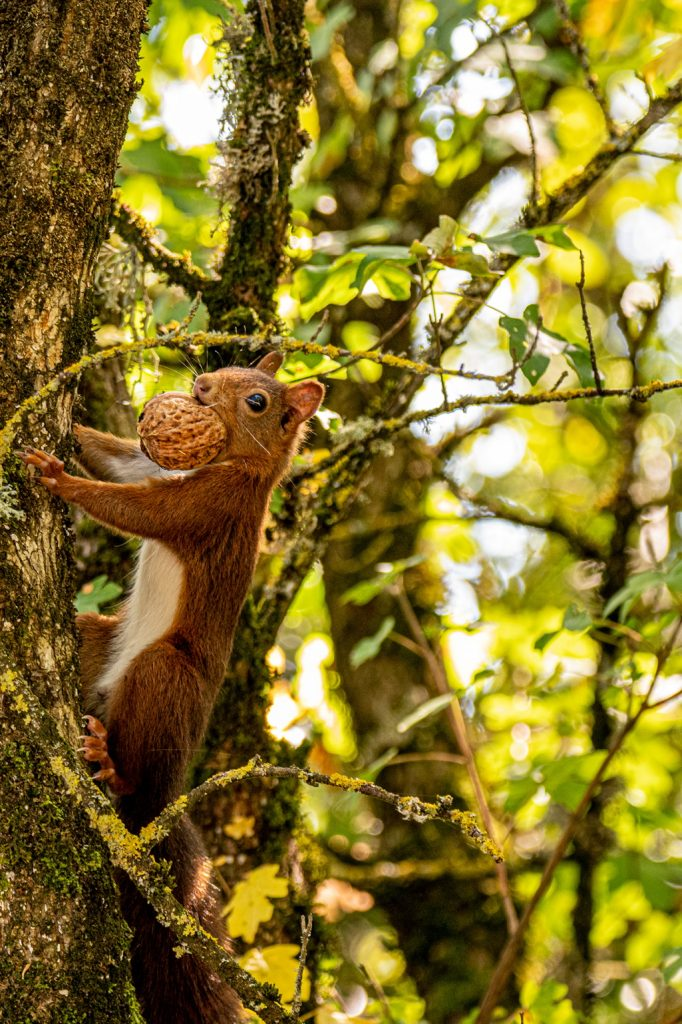 nomadrandoacheval ecureuil nature instants suspendus